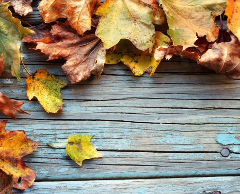 How to Prevent Mold in Autumn